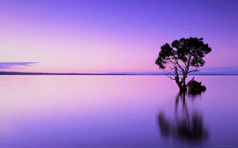 صداهای آرامبخش ذن از طبیعت - آرامش